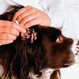 hygiene 160x160 Гигиена собак