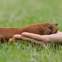 podstriganie kogtej u sobak 200x200 Гигиена собак