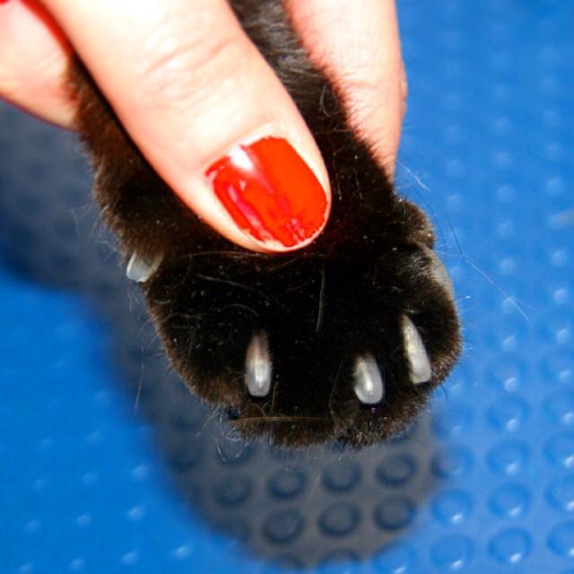 mjagkie kogotki anticarapki Кошки
