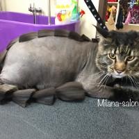Стрижка кошки и стрижка кота в салоне